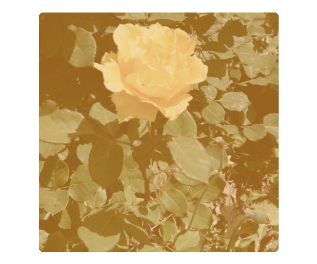 Rose Bystedt- Egan.jpg