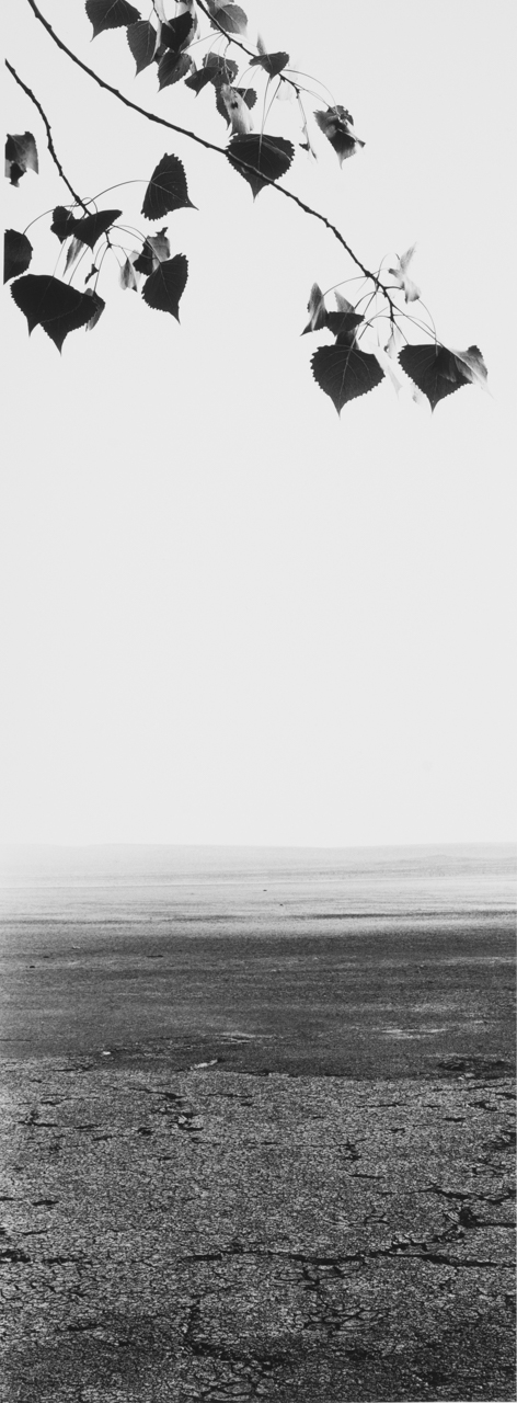 Cottonwood Playa.jpg