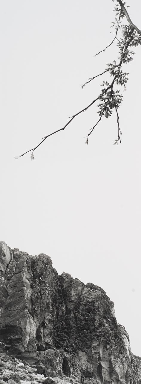 Redbud Fort Rock.jpg
