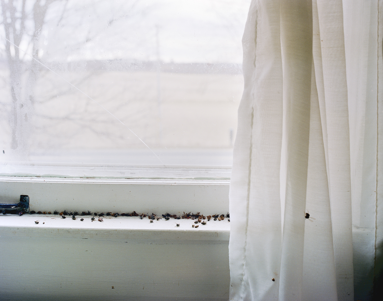 Sara Fahling, Windowsill