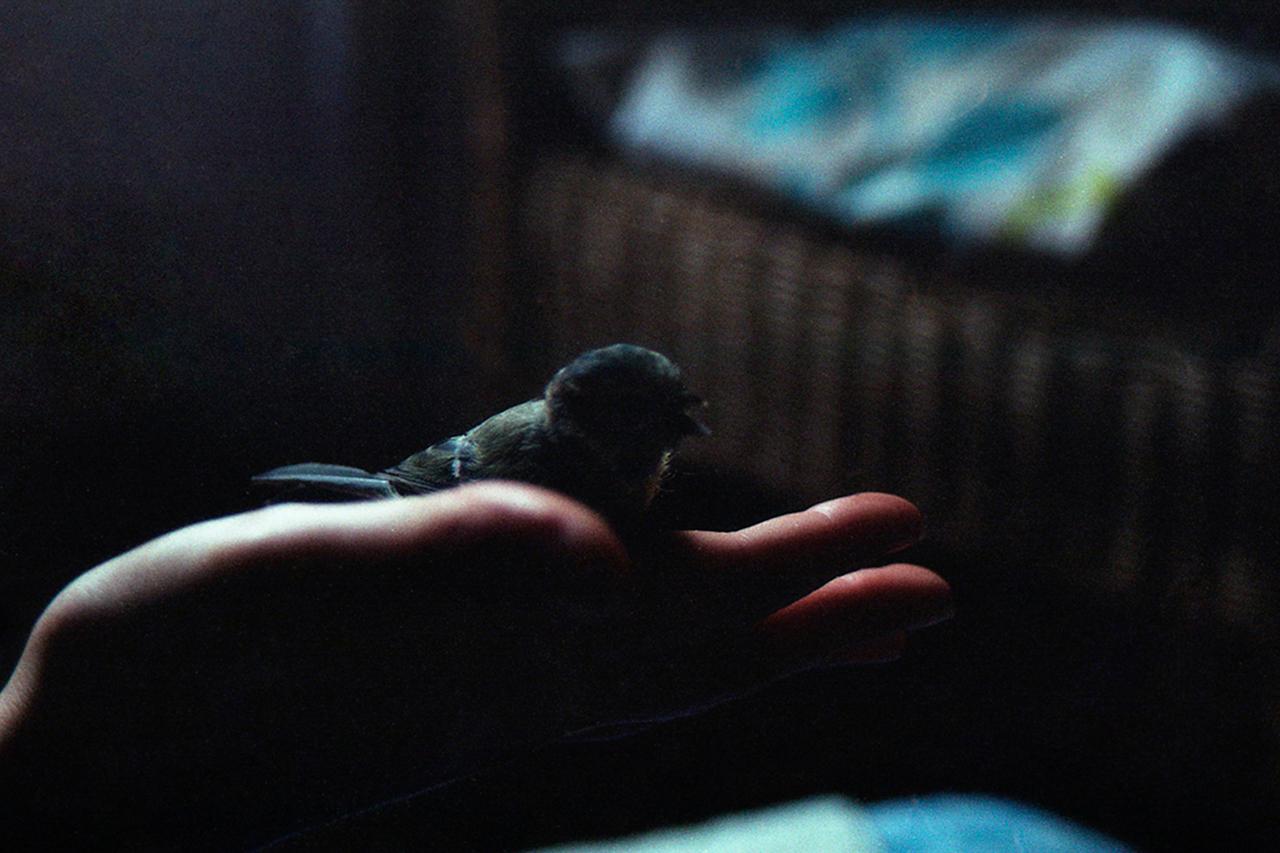 Mathilde Guiho, Oiseau