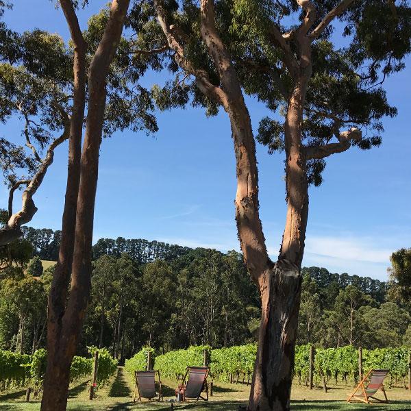 mornington-peninsula-picnic-date-thumb.jpg