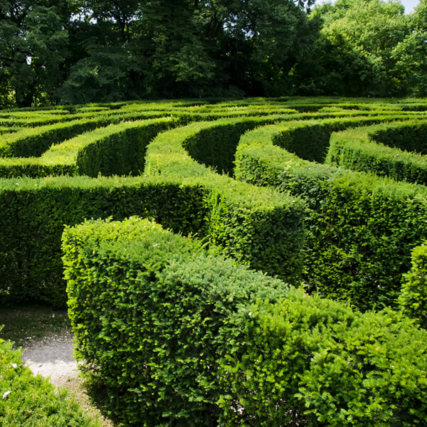 Amazeing day out at Avenel Maze.jpg