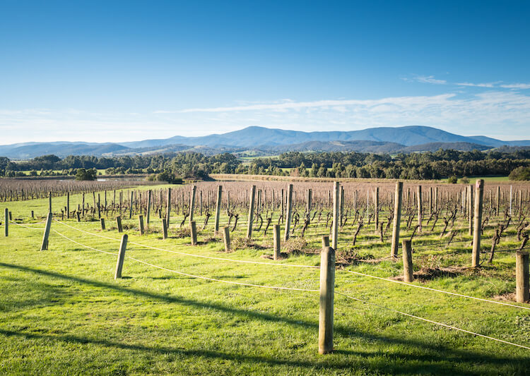 Day Trips From Melbourne: Yarra Valley.jpg