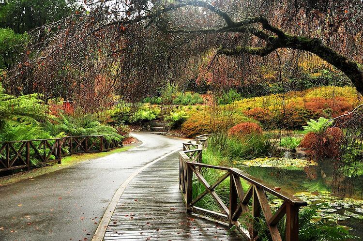 Day Trips From Melbourne: Dandenong Ranges.jpg
