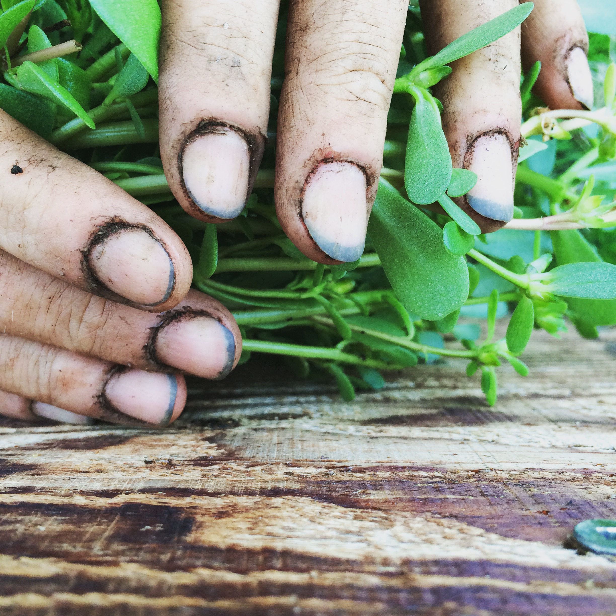 Whenever possible grow your herbs in your garden to develop even greater relationship
