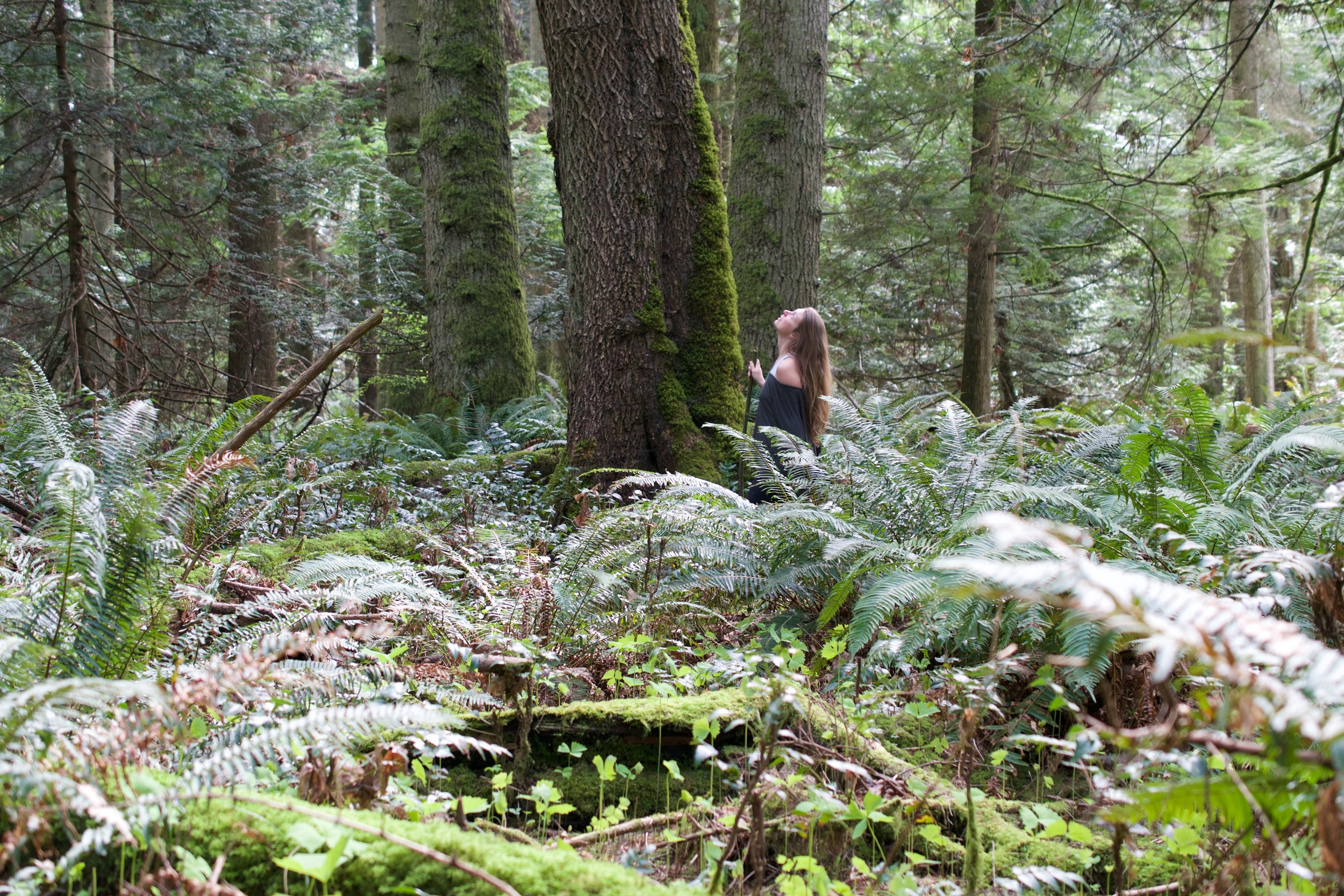 A tremendous sense of calm when you slow yourself down to the pace and quiet of the movements of the forest. On MRI researchers have seen that our brains send more blood flow and activity to the areas of the brain that are associated with empathy and altruism when looking at natural scenes.