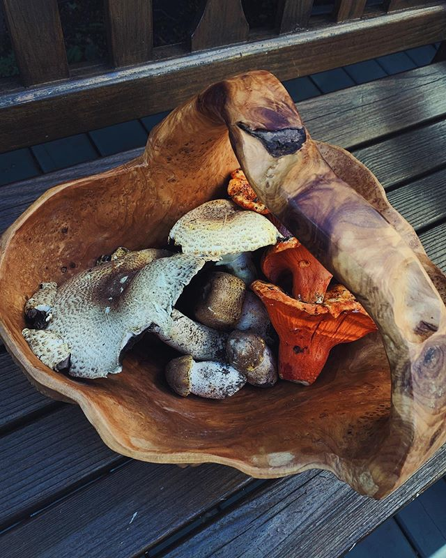"""When Roger and I have a date night: 😂 Prince and lobster finds! Ate up the Prince mushroom """"Agaricus augustus"""" has a strong almond flavour and great pop when eating!   Wild mushrooms are a great way to add tonic foods to your diet: they educate your immune system. They are full of different polysaccharides however, indigestible fibres that depending on your unique gut flora can result in excess gas production or digestive discomfort.   I do not want to discourage anyone from foraging, with proper ID, safety and aid from someone in the know, mushroom foraging is like an Easter egg hunt for adults. It's best however even when properly identified to eat only small amounts of any mushroom for the first few times to make sure you don't have an adverse digestive reaction.   🍄 #wildfoodlove"""