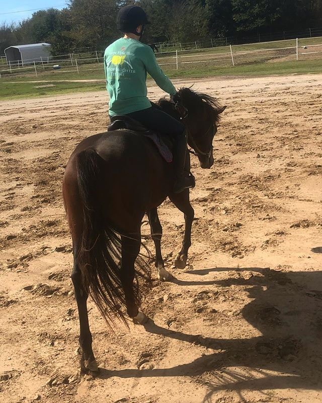 Tamnation is out and about, he loves being in work! #ottb #ottblove #horsesofinstagram #horse #ottbsofinstagram #stallion #racehorsetoridinghorse
