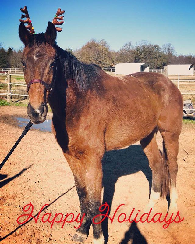 Happy Holidays from Saints n Angels #ottb #ottbsofinstagram #ottblove #horsesofinstagram #horse #horsesofinstagram