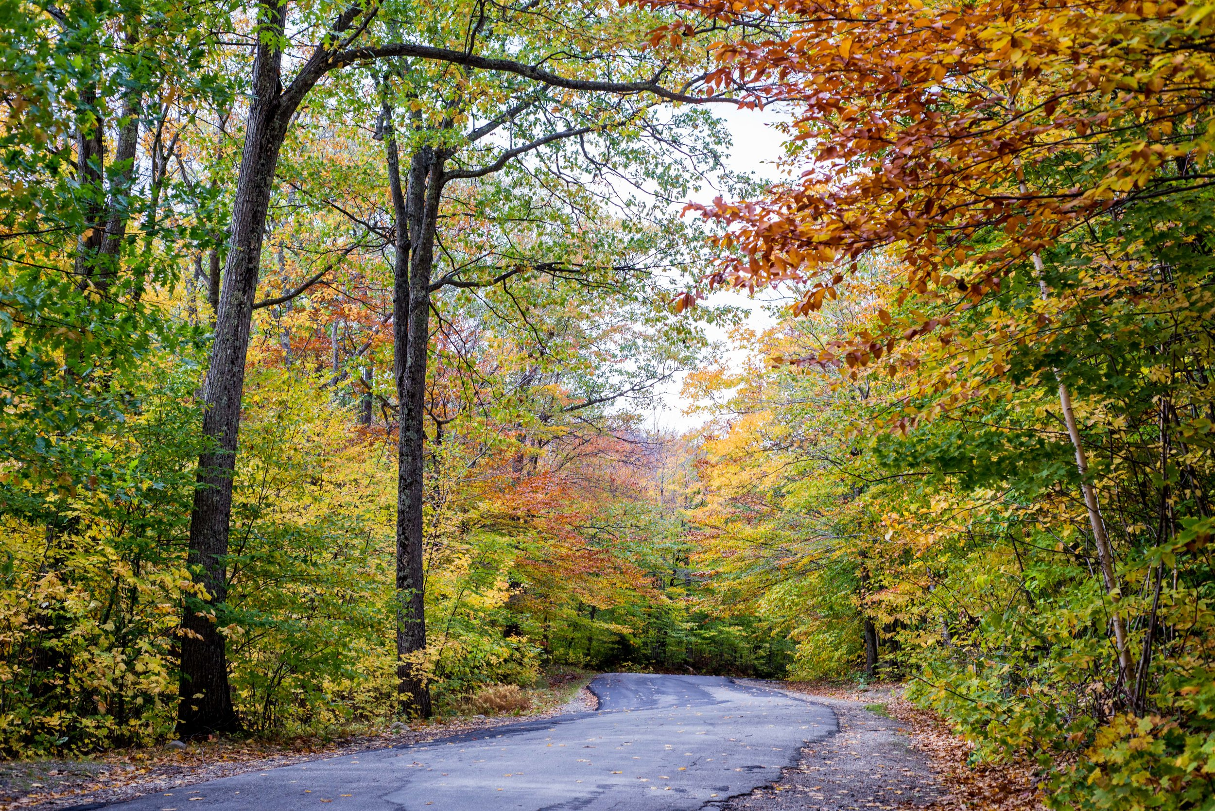 Autumn leaves at Arethusa Falls Trailhead in October by Caitlyn Lunsford Photography