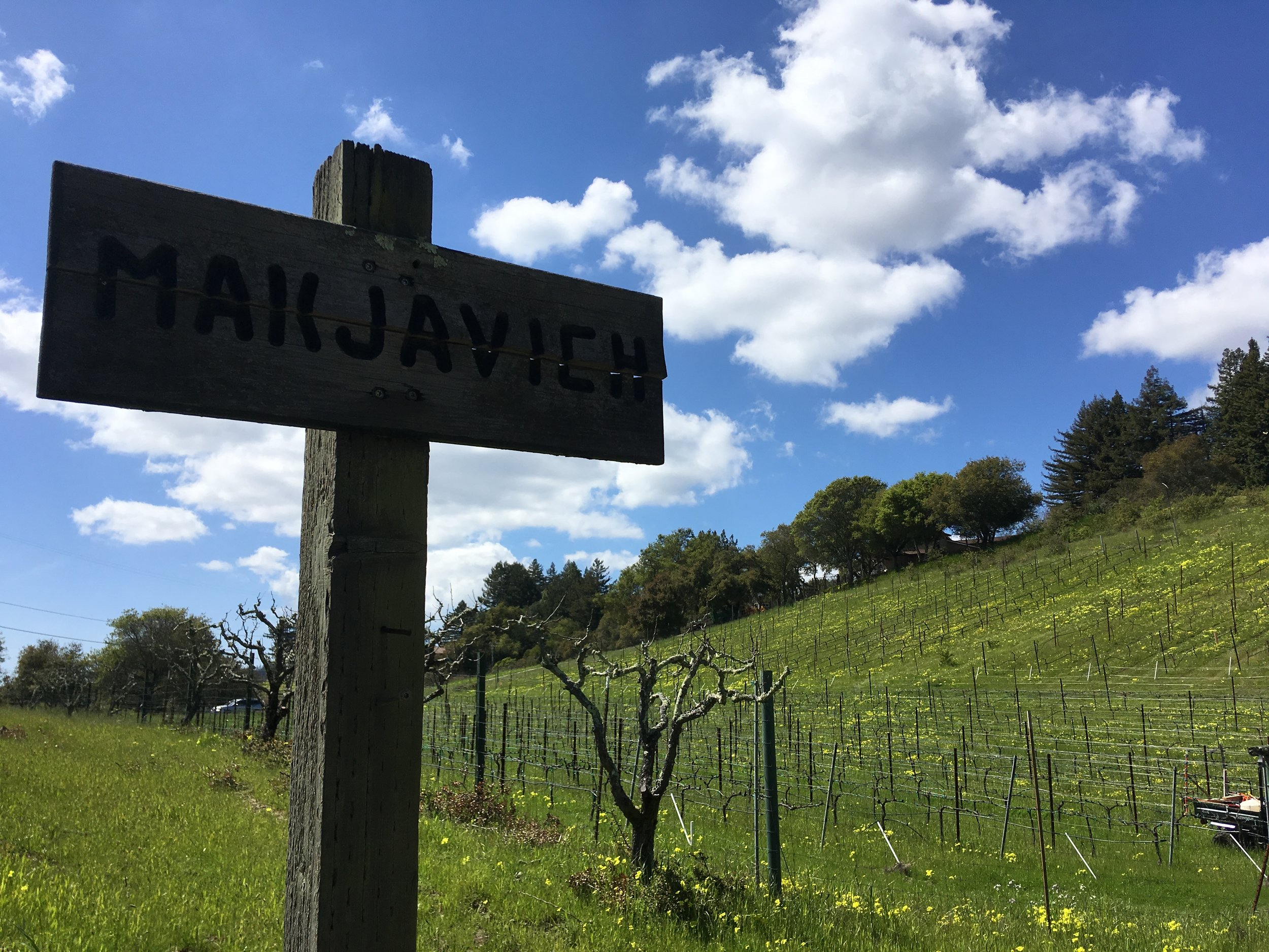 Makjavich Vineyard