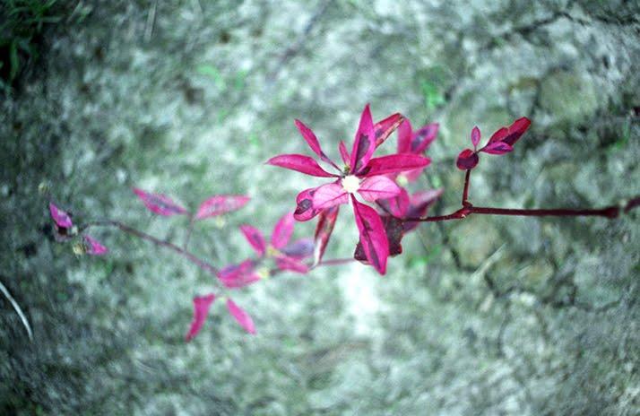 beautiful-odd-flower.jpg