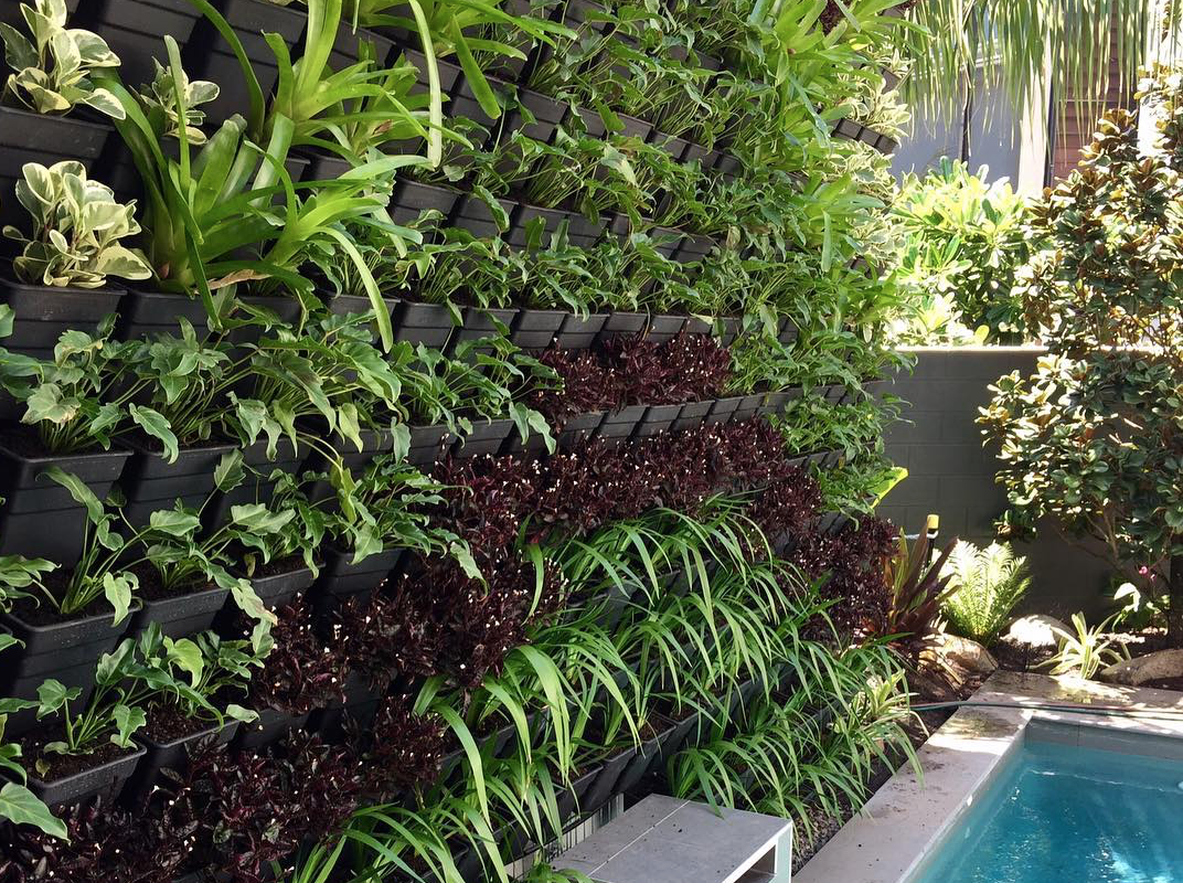 Vertical Wall Garden - Example displays & ePlants pick for best vertical wall plants
