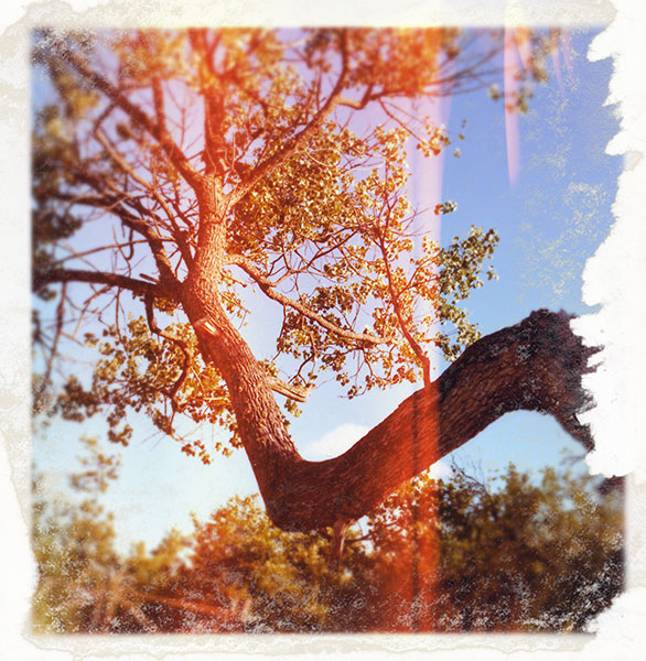 Bended tree