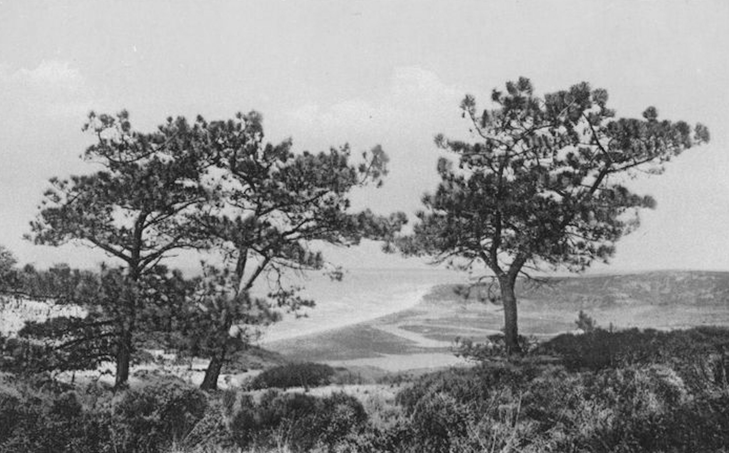 La Jolla is the only place on mainland America where the Torrey Pine grows.