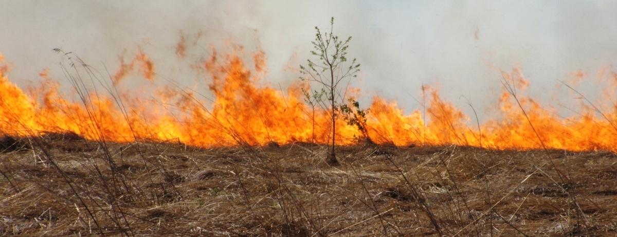 Maintaining the Prairie Labyrinth -