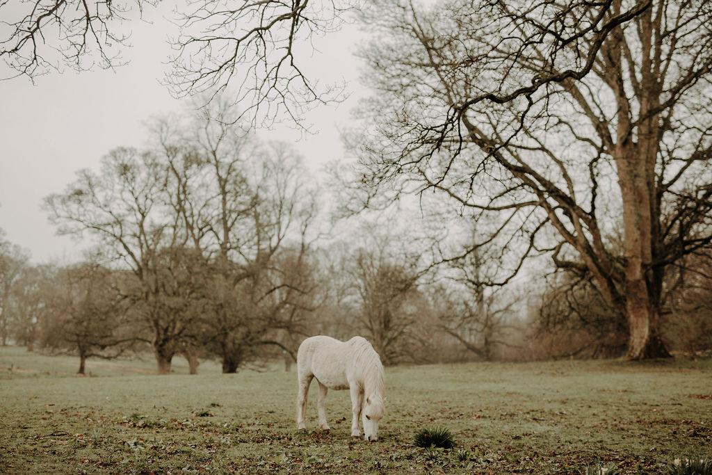 Wedding Horse Scotland