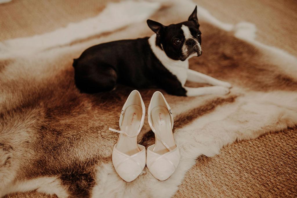 Wedding with a dog Scotland
