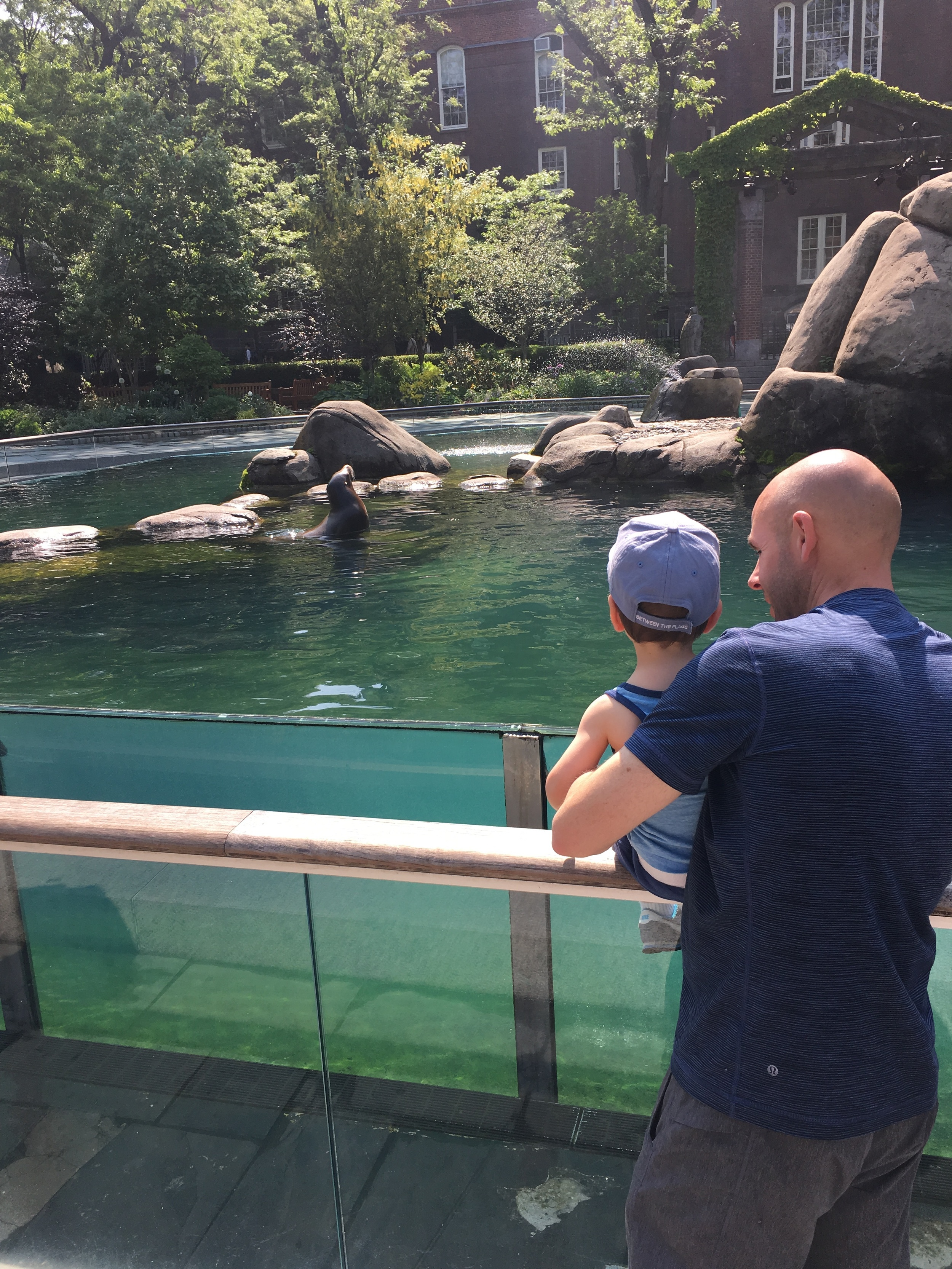 Max and his Dad checking out the seal at the Central park zoo