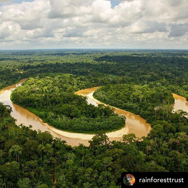💚 Posted @withrepost • @rainforesttrust Fires are a major issue for our rainforests and our planet. These fires are intensified by many factors, including the climate crisis and deforestation. Loss of habitat through illegal logging and development exacerbates the intensity and duration of these fires, helping to create situations like the one in the Brazilian Amazon today. . Wondering what you can do to help? . 1. Keep informed about the situation. Sites like Global Forest Watch Fires (http://fires.globalforestwatch.org/home/) provide valuable information about the fires going on right now. . 2. Share your passion for the rainforest with your friends. Educate others about this issue and why it is so important. . 3. Try changing your daily habits to be more environmentally friendly. Purchasing environmentally-friendly products and reducing or reusing paper is a great way to start! . 4. If you can, make your voice for the environment heard in your local and national elections. . 5. Support organizations like Rainforest Trust. While we can't help stop these particular fires, our work to prevent deforestation helps stop fires like this from happening again. Click the link in the bio to help protect rainforests around the world. . . . . #amazonfires #amazon #rainforest #wildlife #nature #deforestation #saveacres #prayforamazonia #lifeonearth