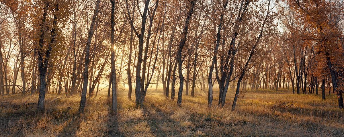 Cottonwood Sunrise