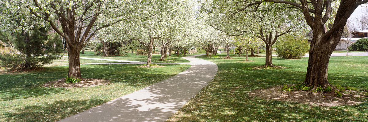 Spring Blossoms in Glenmere Park