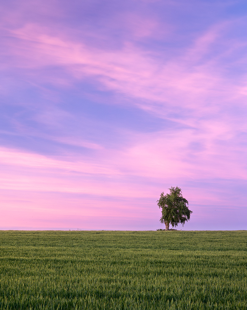 Wheat and Tree