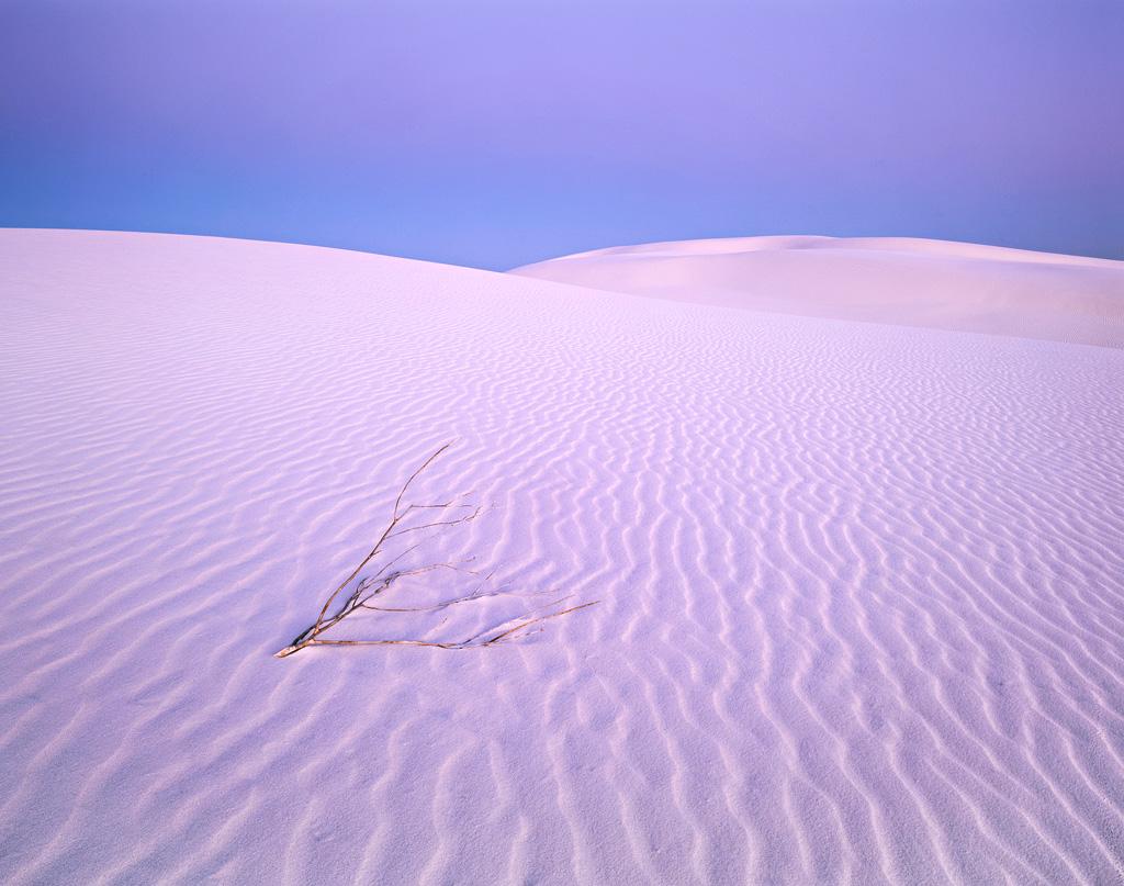 Twilight Sands and Shrub