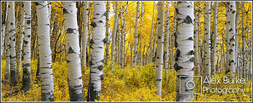 Near Kebler Pass, Colorado - October 2014