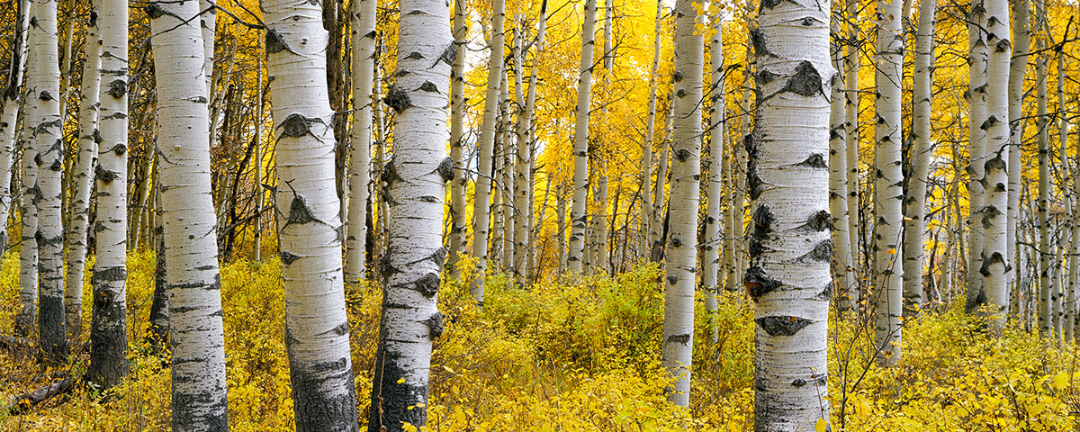I spend much of my fall trips just sitting deep in the aspen forests and reflecting on the year.  Colorado has a long winter and I find the emotional connection with autumn to be quite strong.