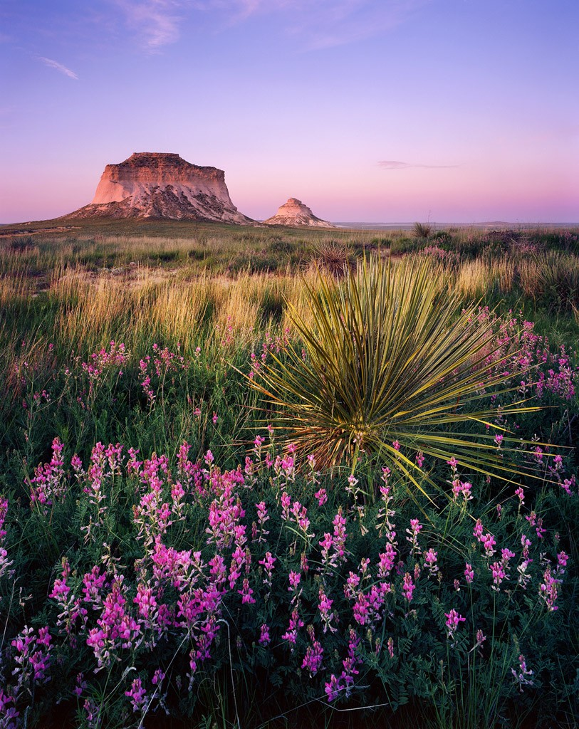 Purple Wildflowers and Yucca in front of the Pawnee Buttes at sunset.  Pawnee National Grasslands, Colorado - June 2015