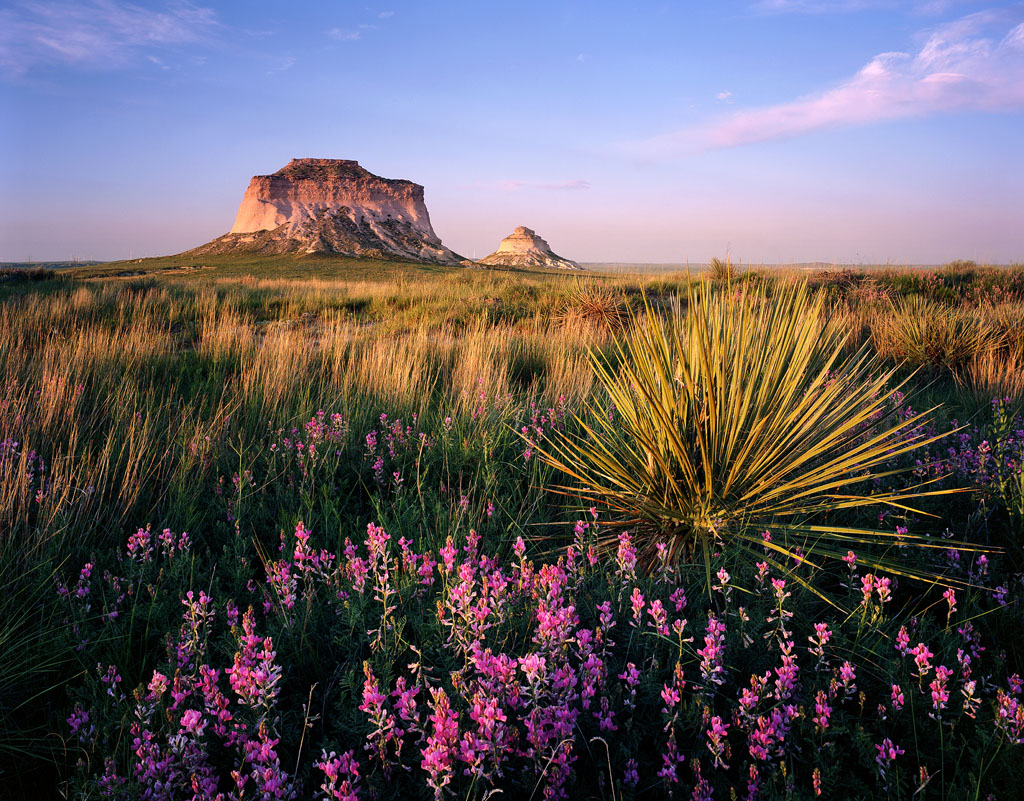 """Pawnee Buttes Wildflowers"" – My favorite place on the Colorado plains was carpeted in purple flowers that I had never seen in such numbers.  Every year the plains take on a different character which is why I go out here as often as possible.  Prints available."