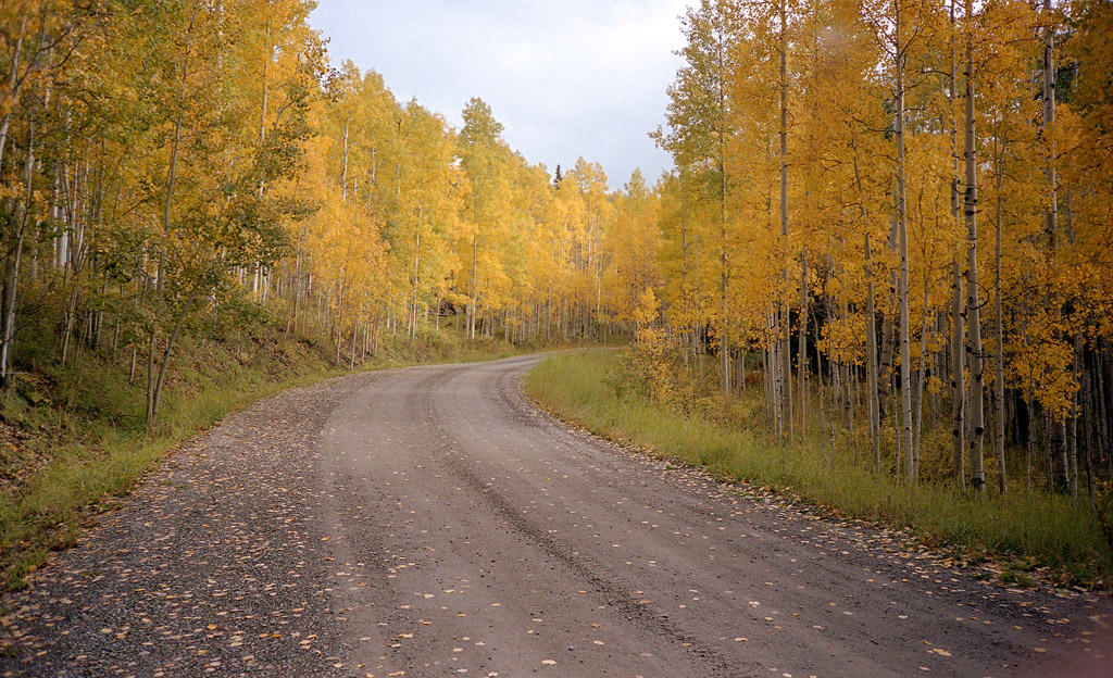 A golden tree-lined road