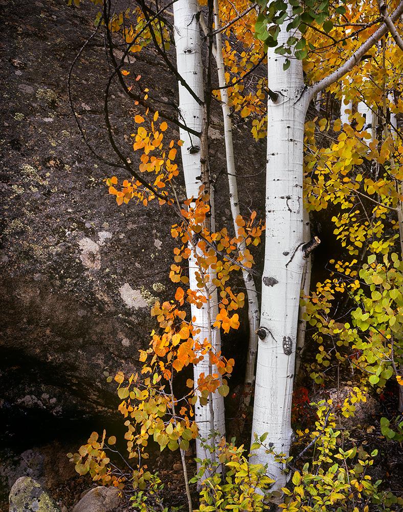 """Aspen and Boulder"" - Velvia 50 4x5, 135mm lens. 10 seconds at f22, no filters."