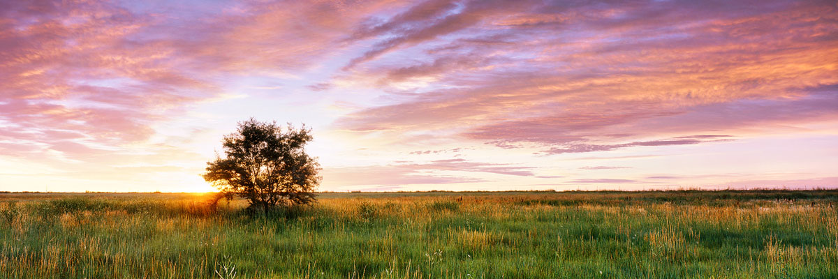 """Prairie Tree Sunrise"" - Provia 100f 6x17, 105mm lens, 2 seconds at f32, 3 stop reverse GND and center spot ND filters."