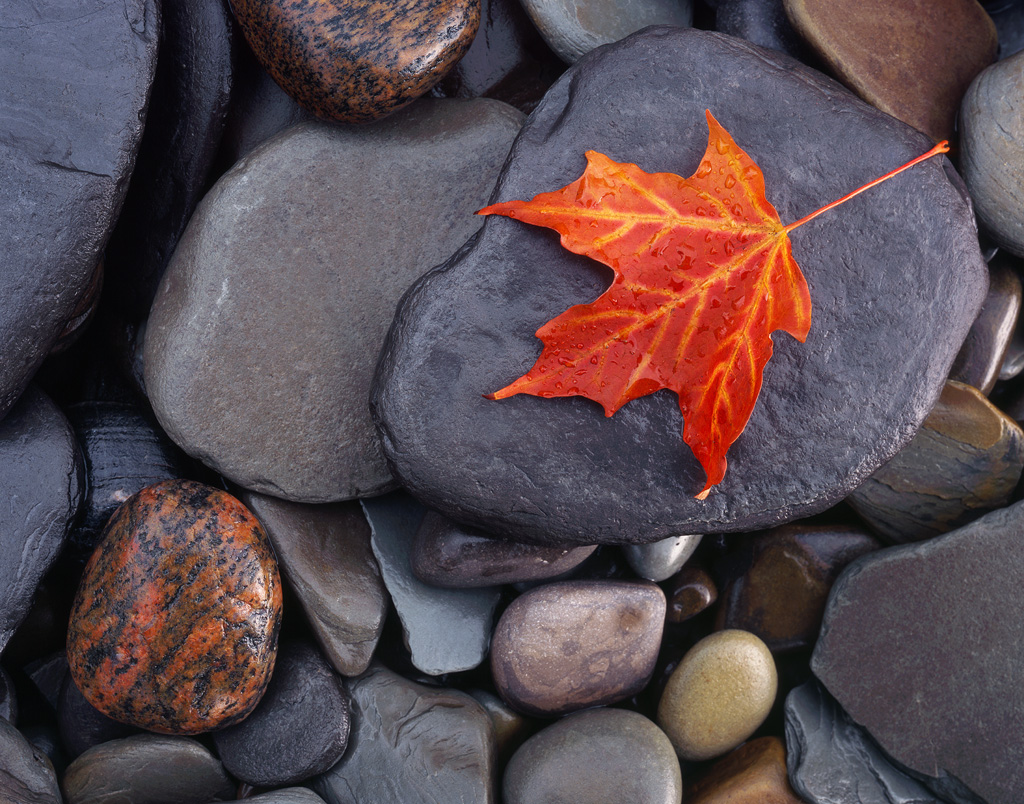 """""""Autumn on the Rocks"""" - A lone maple leaf on the wet multicolored stones of the Lake Erie shore. My favorite from my trip out east. Prints Available."""
