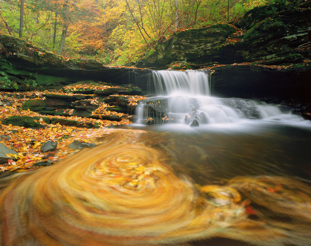 """""""Autumn in Motion"""" - Leaves swirl about near a waterfall in Ricketts Glen State Park, Pennsylvania. Prints Available."""