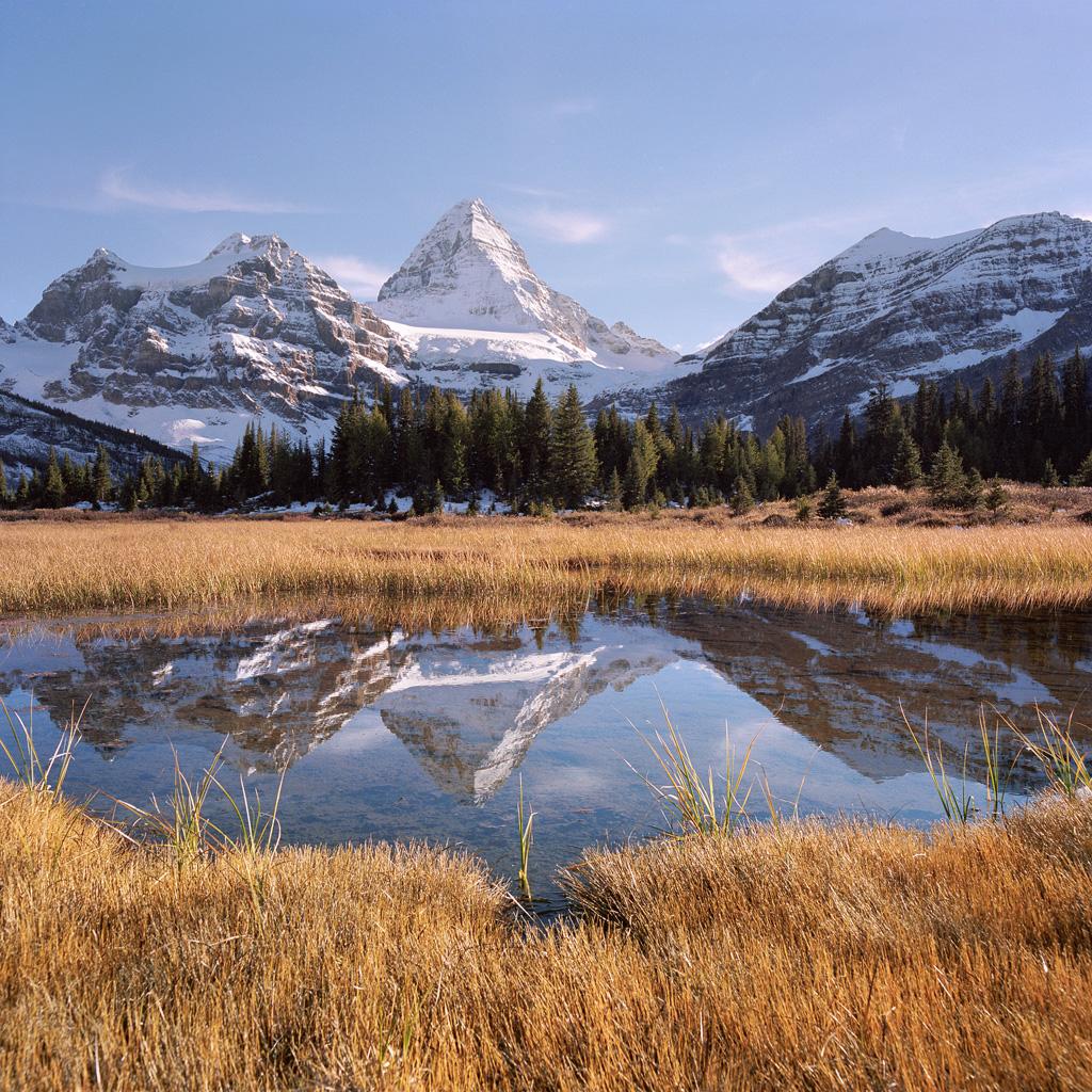 Alpine Wonder