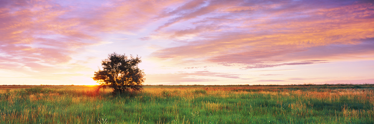 Prairie Tree Sunrise