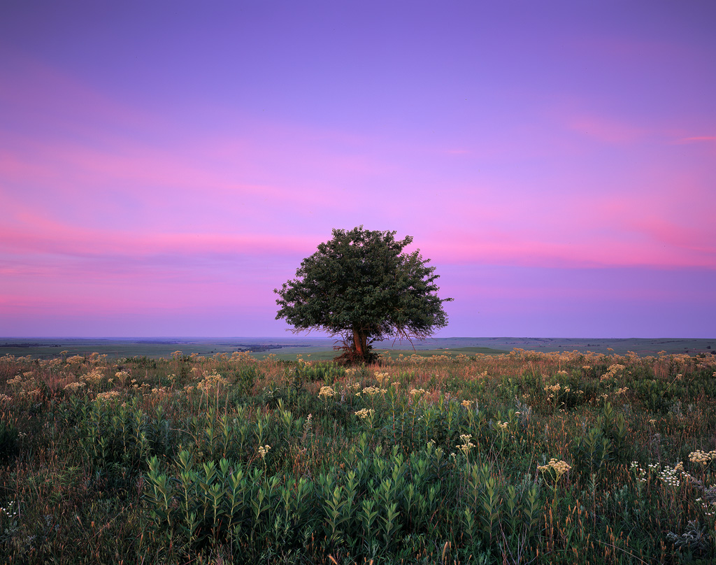 """""""Solitude at Sunrise"""" - A lone tree high on the Flint Hills at sunrise. Prints available,"""