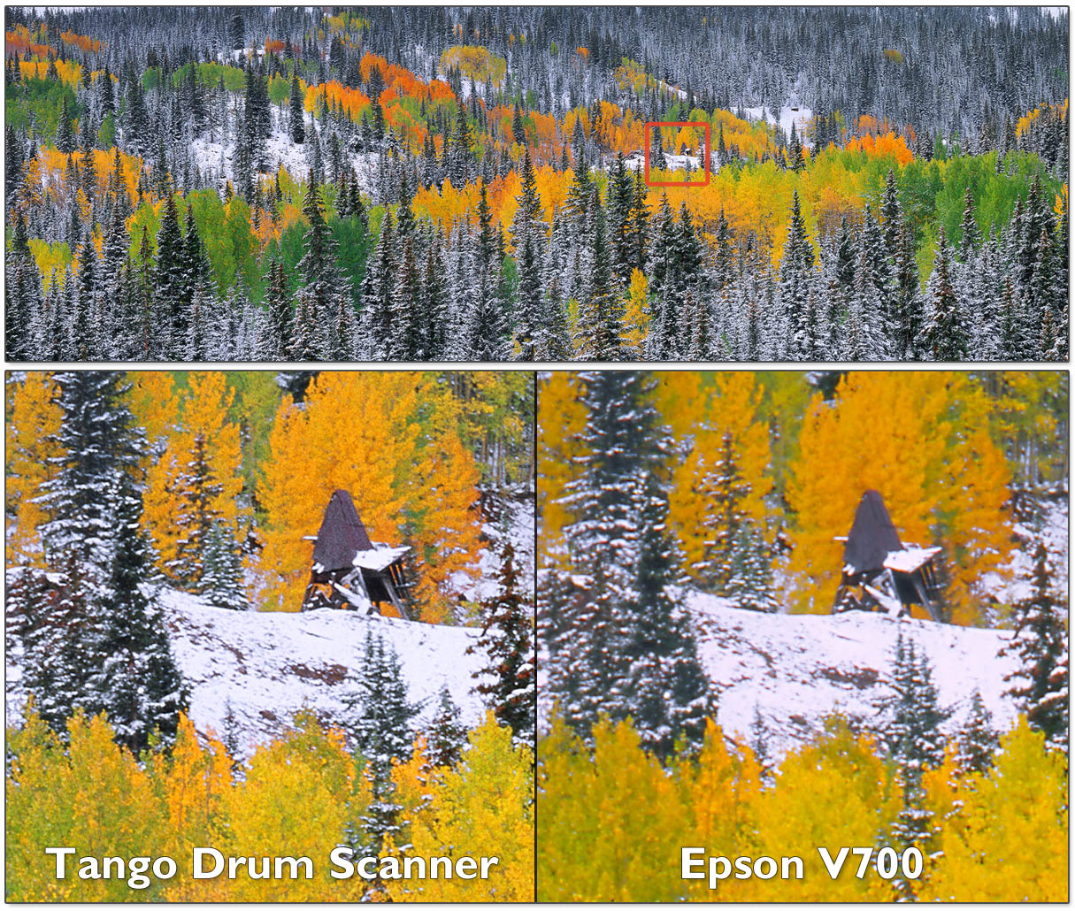 A sheet of Velvia 100, scanned on the Tango Drum Scanner (left) and a consumer flatbed on the right. Notice the huge increase in fine detail on the drum scan.