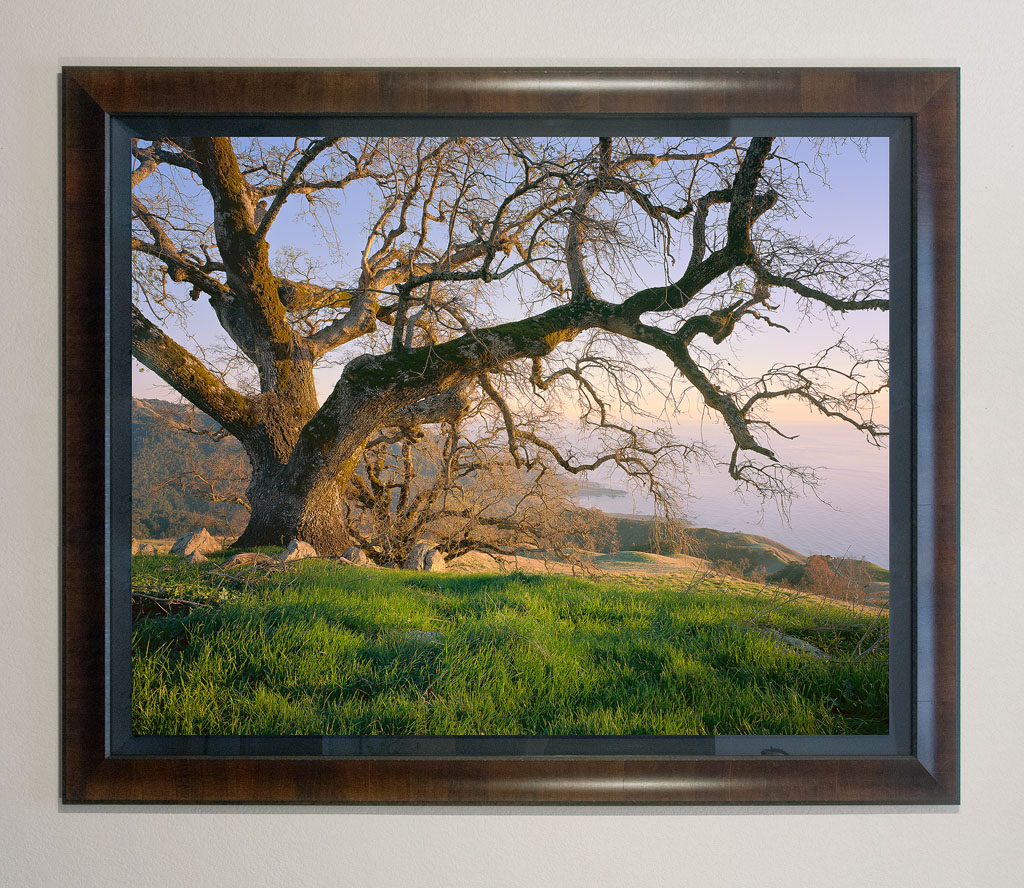 """Coastal Oak"" - 40x50"" premium framed print"