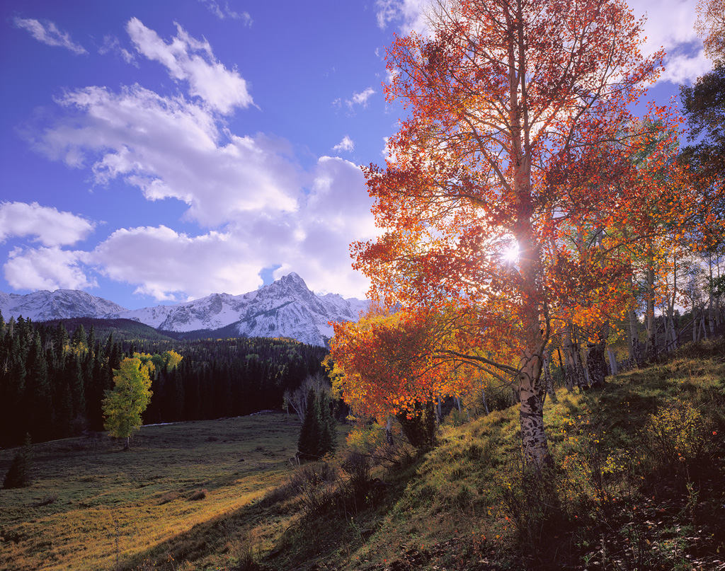 """Autumn Glow"" - The sun shines through a brilliant red aspen with the snow-capped San Juan Mountains in the background.   Prints Available"