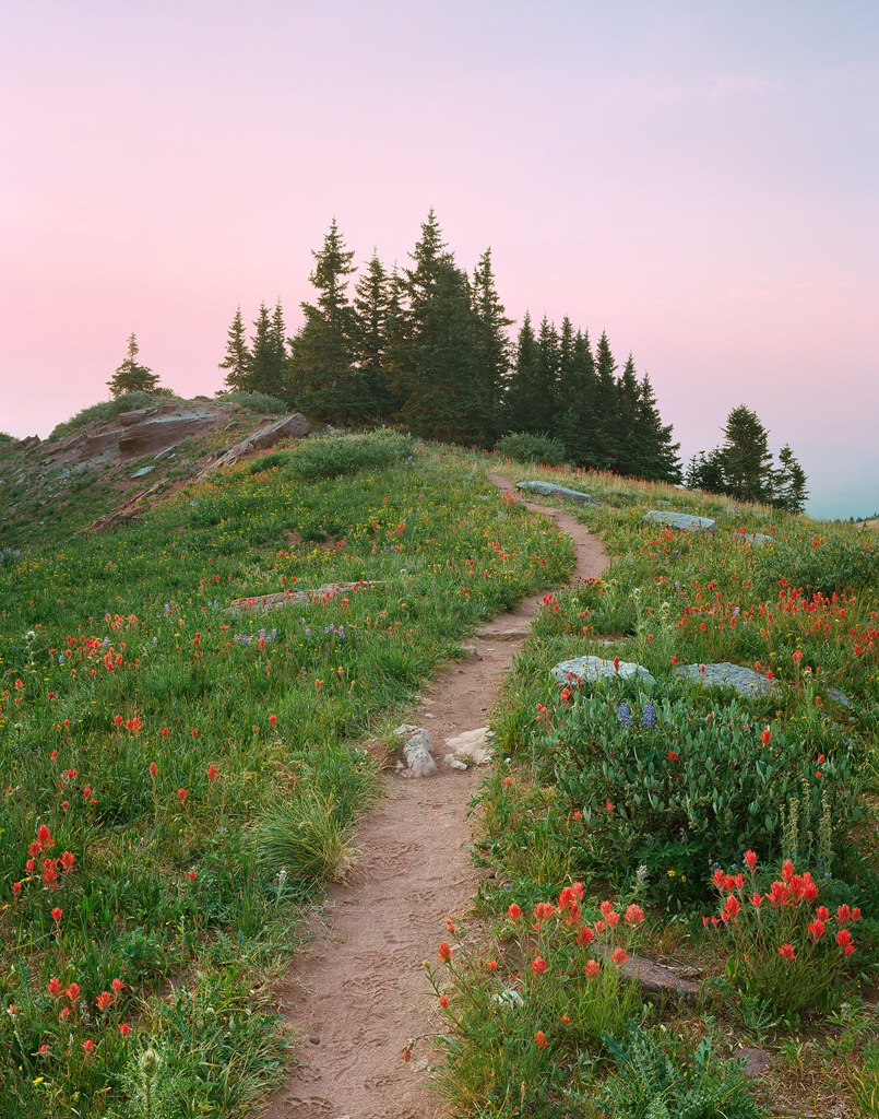 """Shrine Ridge Trail"" - Flowers line a ridge-top trail in morning light. Prints Available."