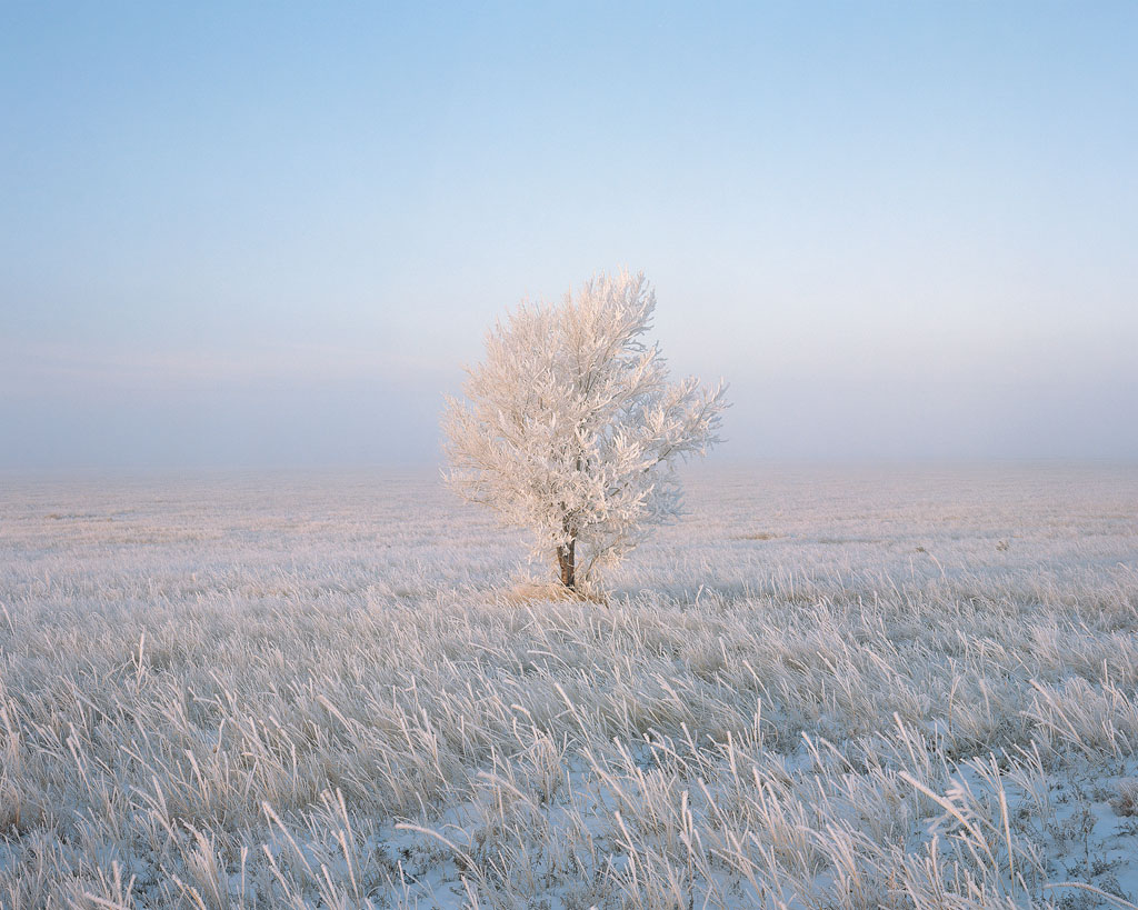 Frosty Solitude