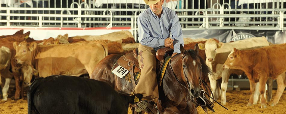 horse_show_cutting_gianluca_munarini.jpg