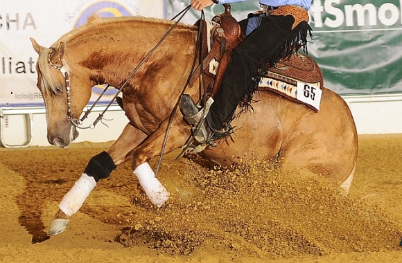 horse_show_reining.png