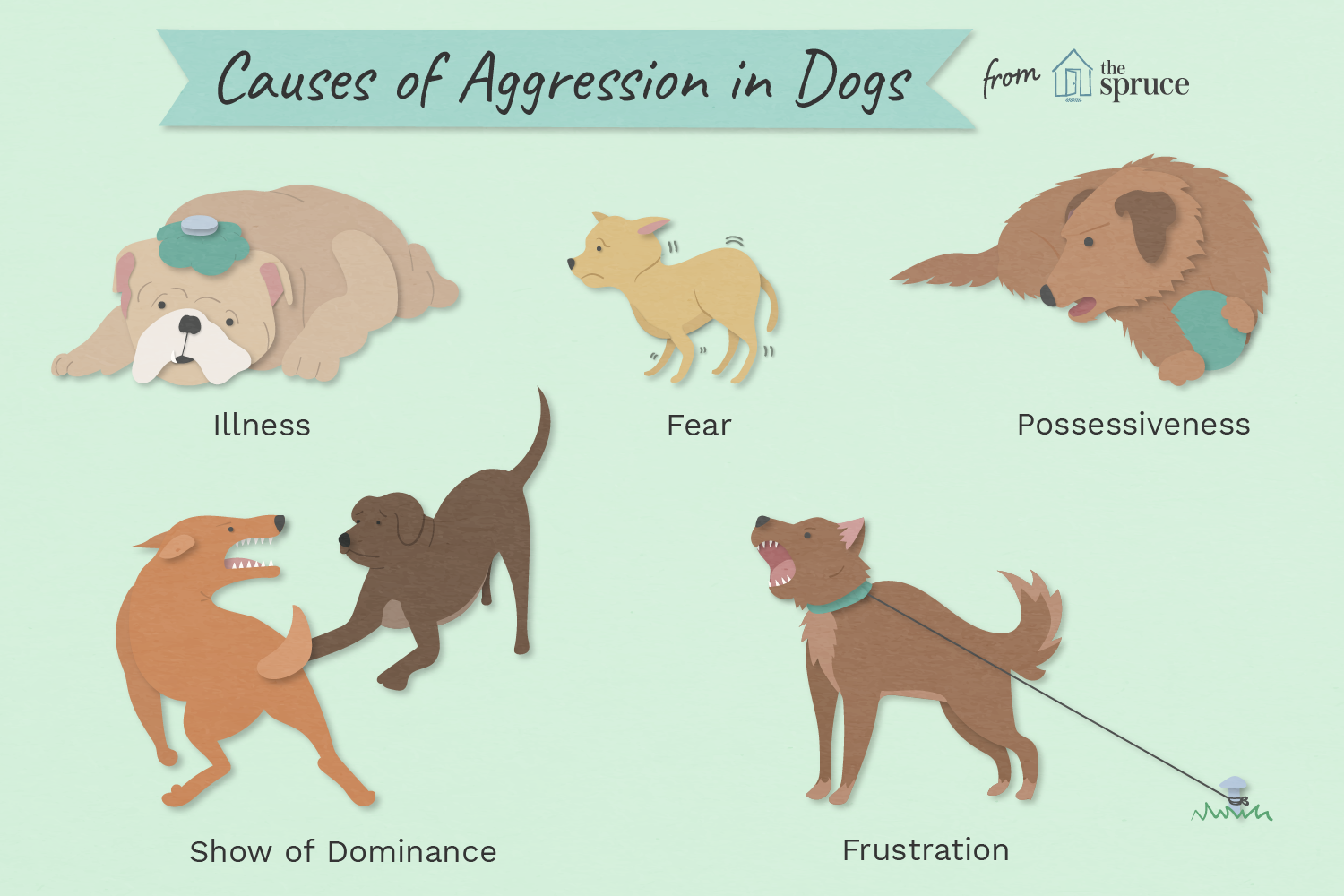 top-causes-of-aggression-in-dogs-1117877_final-01.png