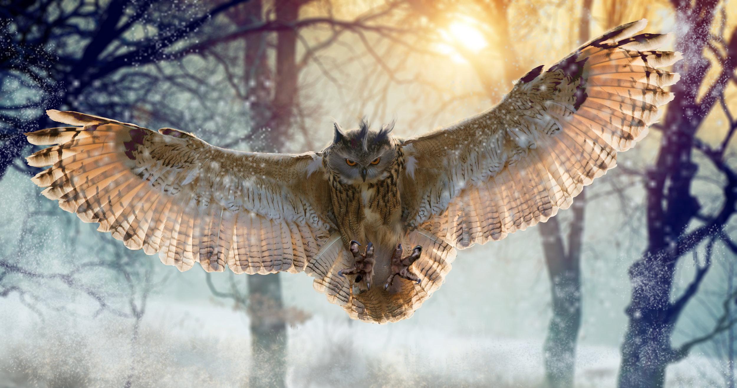 AWAY owl